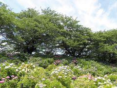 この場所が春に満開の桜の枝が垂れていた土手と同じ場所とは思えないくらい、堤の雰囲気は変わります。