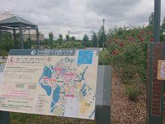 -2020年6月21日- 【いわみざわ公園バラ園(岩見沢市)】 (入場無料)(駐車場無料) (札幌から道央自動車道で45km) (所要時間45分) 岩見沢インターから車で5分。
