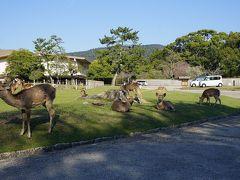 ●奈良公園  見る限り、人が極端に少ないだけで、鹿たちは、いつも通りのんびりと…。 平和な奈良公園。