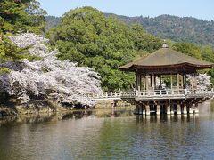 ●奈良公園  いいですね、奈良の春。