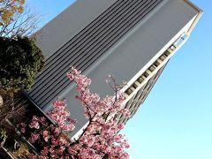 結局、今年は通勤途中の近所の桜以外で、桜の花を見たのはこの時だけかしら。 いや、桜だけじゃなく、春のお花は何も楽しめなかったなぁ。