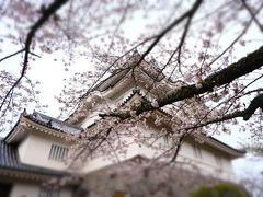 えー、思ったほど階段キツくなかったです(笑) ちょうど桜も咲いていていい感じの写真が撮れました。