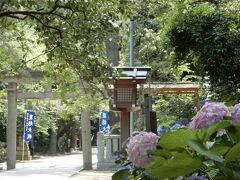 梅雨の中休みの今日、晴れたらやっぱりお出かけしたくなるよー   近鉄電車で阿部野橋から13分 藤井寺へ