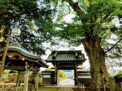 「狭山三十三観音霊場9番 芳林山梅岩寺」 はじめは真言宗として創建されましたが、その後曹洞宗に改めたそうです。 JRの駅からハイキングは毎年この時期に、新秋津駅からこのお寺を通って 北山公園に行くコースがあったので何度かこのお寺に来たことがあります。 中から外を見た写真ですが、右に見えるのが東京都天然記念物となっている 梅岩寺のケヤキ。