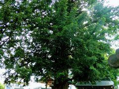 山門の反対側には東村山市指定天然記念物の梅岩寺のカヤがあります。