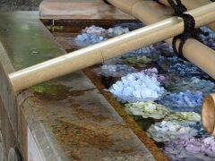 素敵(≧▽≦)  手水舎に紫陽花が。