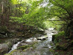 遊歩道をしばらく歩いてようやく「河鹿の滝」に到着.よく観ると岩場にはカジカガエルのおたまじゃくしがぎっしりと這いつくばっていました.