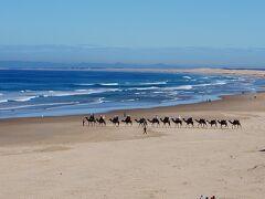 ポートステーブンスのストックトンビーチです。ストックトンビーチは全長30Kmも続き、砂漠の様な最大高さ30Mの巨大な砂丘があります。ご覧の様なラクダに乗ったり、サンドボード、イルカウォッチングが人気です。