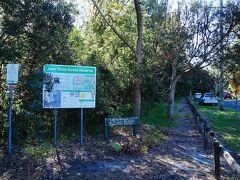 もうひとつのホークスネスト Hawks Nestの森でもトライしますが、ここも野生のコアラは見つからず。そんなに大きな森ではなく、見つけやすい場所と言われているのですが。