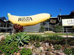 コフスハーバーのシンボルでとても有名なビッグシングス、全長13mのビッグバナナ像です。