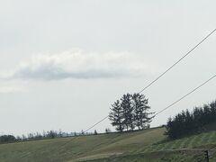 かんのファーム  車の中からパチリ  嵐の木 美瑛に向かいます