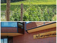 六花亭の近くには富良野ワイン工場や富良野ワインハウスがあります、会社の観楓会やバスツアーで必ずといっていい程立ち寄る場所です 私も以前在籍してた会社の観楓会やwineを買いに立ち寄りました、ここ何年かは大勢の外国人の大型バスでの集団で貸し切りのような状態で立ち寄らなくなりました   ふらのワイン工場 http://www.furanowine.jp/  ふらのワインハウス http://www.furanowine.jp/