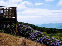 ここの一等地はこの展望台。 ここから見る紫陽花が一番見事です。