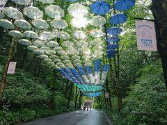 ケーキ工房綵珠から車で35分位でメッツァに到着! 平日は駐車料金が無料です。  この傘を見に来ました~!!