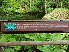 裏摩周がだめなら、神の子池があるさ。 でも、実は初訪問。 狭い未舗装林道を走ると駐車場があり、徒歩1分で到着。 9:07-9:23 969km