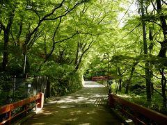 暫く道路を進むと、清々しい新緑に囲まれた「河鹿橋」に到着します。