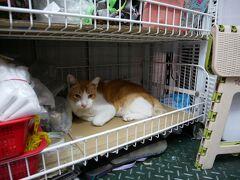 チェックアウトしたら、空港に向かう前に近所をぶらぶら。 チャイナタウンの猫、ミミくんは日中お土産物屋さんの中でくつろいでいます。  お土産物屋のおばちゃん、ミミ君元気でいるかな。 早く再会したいです。