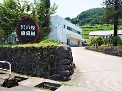 近くには岩の原ワイン醸造所があり、二回目の訪問です。 (  https://www.iwanohara.sgn.ne.jp/   )