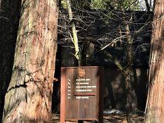 Yosemite Lodge at the Falls。