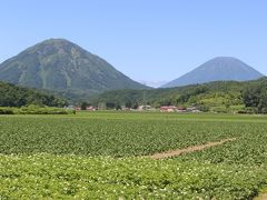 峠を越えると、「蝦夷富士」と呼ばれる羊蹄山が見えてきました。 手前は尻別岳です。 双子のような山です。 アイヌの人たちは、尻別岳を「ピンネシリ(雄山)」、羊蹄山を「マチネシリ(雌山)」と呼んで夫婦の山と思っていたそうです。