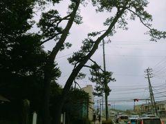 最後に、二木(ふたき)の松です。竹駒神社の北側で、市役所の脇の主要道路沿いにあります。