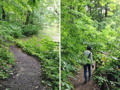 この「三乱の流れ」から「子ノ口(ねのくち)」まで、渓流沿いの歩道を10km歩きます。天候は曇り。坂はゆるやかですが、前夜の雨でぬれた落ち葉で覆われていて、滑ります。 少し行くと、横の木が歩道に覆いかぶさってくるようになり、濡れないように、体を傾けたり、かがんだりして、歩きました。