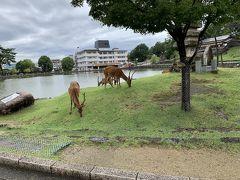 雨が上がったので、ホテルを出てならまち散策へ行くことにします。 猿沢の池とその対岸遠くに見えるのはスターバックスコーヒー。 鹿もあちこちにいます。