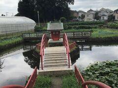 鳥居がありその先、蓮池の中に小さい祠がありました。