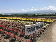 お花畑。きれいだなあ。