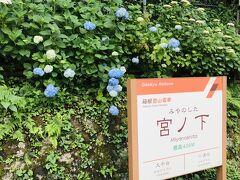 ひと風呂浴びたあとは、宮ノ下を散策。 まずは紫陽花を探しに駅へ。