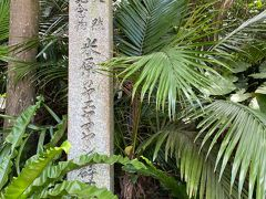 川平湾を後にして向かったのはヤエヤマヤシ群落。 ヤエヤマヤシは石垣島と西表島にしか生息していないというヤシです。