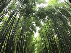 静かに、マイペースでの絵画鑑賞の後は お決まり、野宮神社、竹林の道  十分にソーシャルディスタンスの距離がとれる人出