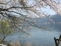 海津大崎の桜。