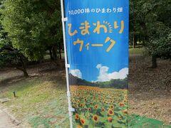 ひまわりウィークは、2020年8月1日(土)~2020年8月16日(日)まで開催されております。 開花状況は、長居植物園のサイトで確認できます。