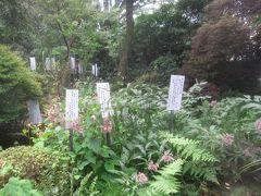 境内には名前が記された札が添えられている植物がいっぱい 故星野亮勝前国分寺住職が昭和25年から38年の間に万葉集に歌われた植物160種を集めて造った植物園だそうで、「万葉植物園」というそうです