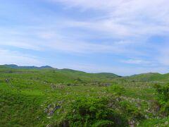 秋芳洞の地上部分は「秋吉台」と呼ばれるカルスト台地が広がっていました。 水に溶けやすい石灰岩で構成された土地では、雨風の浸食でこのような光景になるそうです。