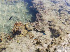 干潮時は熱帯魚が見れます。 いただいたふをまぶすと、バシャバシャと寄ってきます。