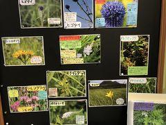 一通り湿原を歩いたら、駐車場そばのビジターセンターへ。湿原の草花の解説があったので、子供達と一緒に先程見つけた花の名前を確認しました。良い学習になったかな。