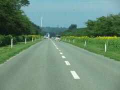 八郎潟を秋田方面から男鹿方面に横切る道路は菜の花ロードと呼ばれています。