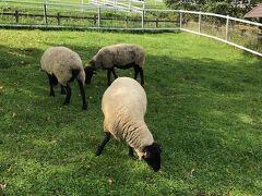 清泉寮で動物に会えなかったのでまきば公園に行きました。清泉寮から行って一番近い駐車場に停めると、まきば公園のメインの建物までめちゃ遠かったです。。。そこを過ぎてメインの建物のところに停めるべきでした。暑い中、羊や馬を見ながら結構歩き回りました。近くで触れます。