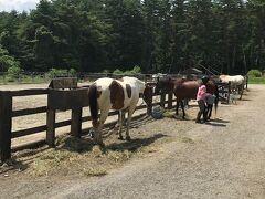 下に降りてランチへ。馬が見えるイタリアン トレカバロさんに行きました。