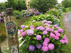 昨年は6月頭に行って咲き始めでしたが、今年は見頃ほんのり過ぎ…?という感じでとってもキレイでした(//∇//)