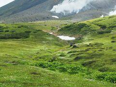 谷筋に沿って雪渓付近までチングルマの群落。雪解けのタイミングが同じなのでこういう咲き方になるのかな?