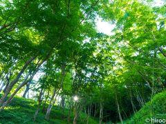 秋には、もみじのトンネルと言われる巴川沿い。私の一番のお気に入りの場所です。