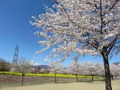 下道で走っていると何やら警備員が誘導している。 つられて行ってみると立派な桜が・・・。  「赤城南面千本桜」