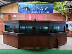 ここには、池田湖に生息する、大ウナギが展示されています。