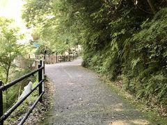 帰り道はちょこっと寄り道して河津七滝へ。  滝が近いせいか涼しく感じる。
