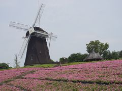 ●花博記念公園鶴見緑地  暑い園内を歩きながら、やってきました「風車の丘大花壇」 暑い空気感までも写真に表れていると思います。
