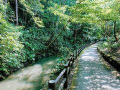 遊水緑道です。 帷子川の水を引いているのでしょうかね? あまりきれいな水じゃない。 少し生臭い。  でも森からのマイナスイオンで涼しい。