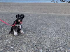 少し涼しくなったので、海岸へお散歩に。 海が近いっていいな。 憧れの生活。